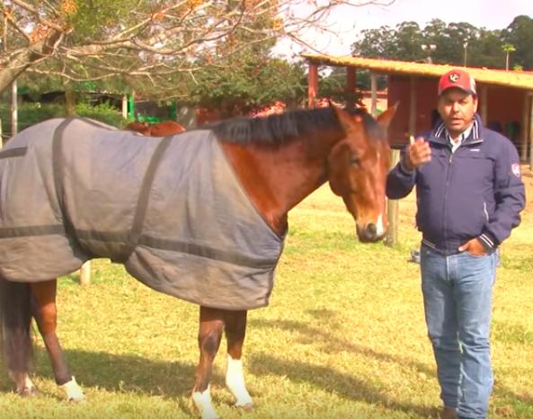 Cuidados com os cavalos no inverno