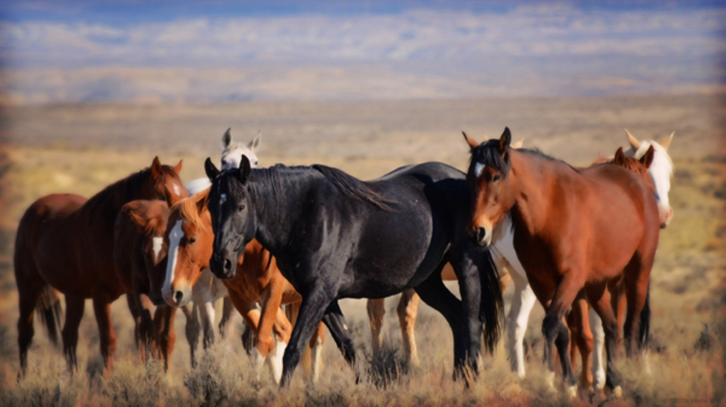 rogerclark comportamento 1 - Comportamento Animal – o corpo do cavalo fala