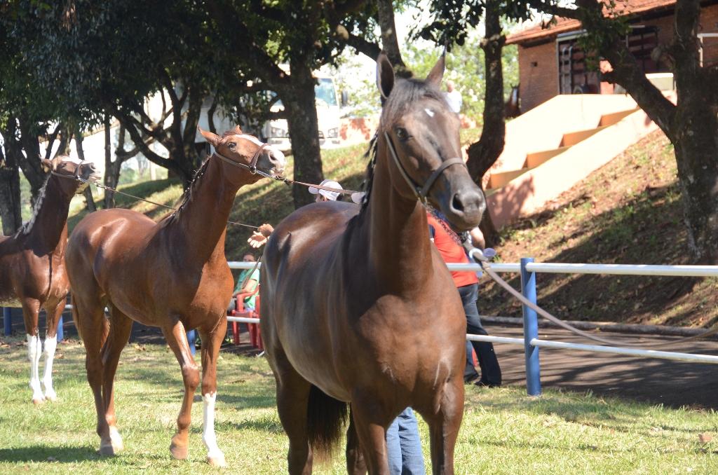 Cavalo Mangalarga esteve em destaque na Facilpa