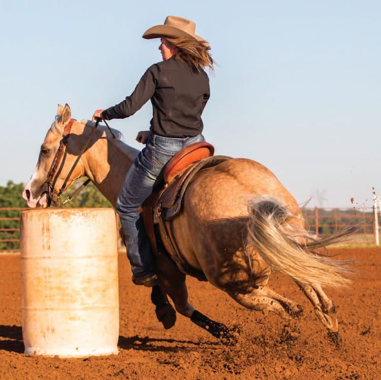 085842938 Círculos para o treinamento de cavalos de Tambor - Cavalus