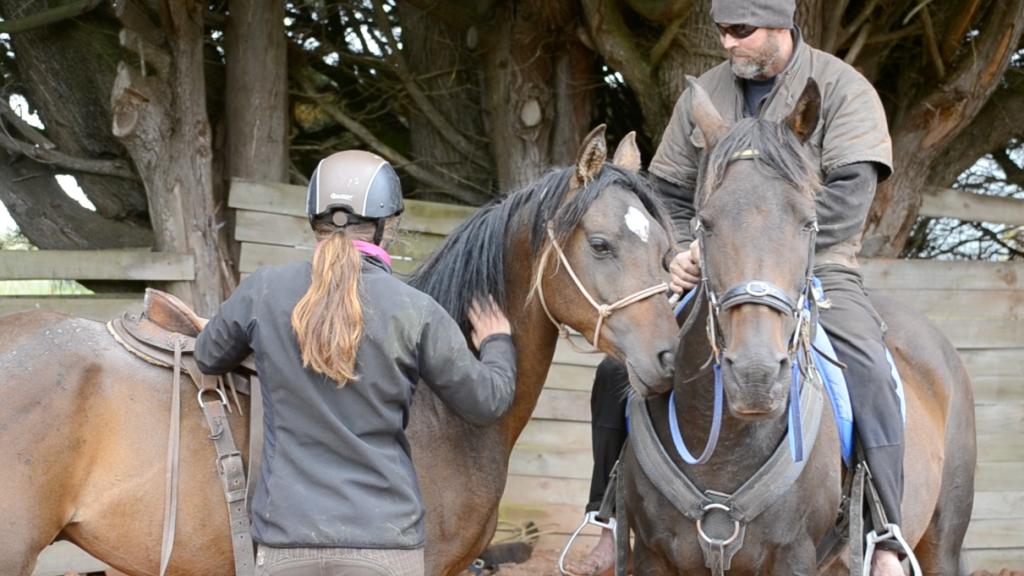 46886f1d6 Trabalho voluntário com cavalos - Cavalus