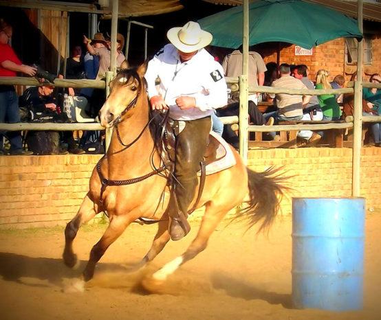 Boerperd o cavalo símbolo da África do Sul