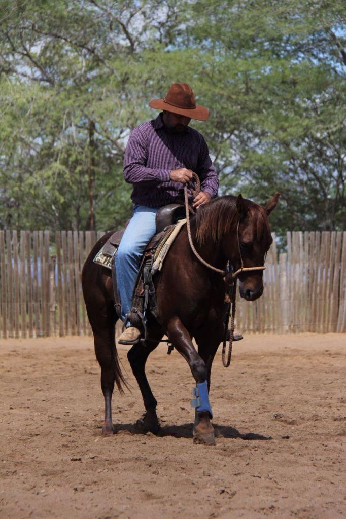 Se você quer trabalhar como treinador de cavalos ou já trabalha, preste atenção no que o Aluísio Marins tem a dizer sobre levar essa profissão