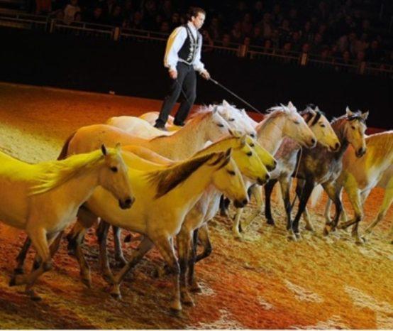 A cada dois anos, a Equitana se torna o capital do mundo equestre
