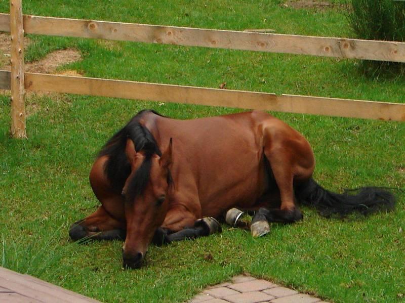 medicina veterinaria de equinos