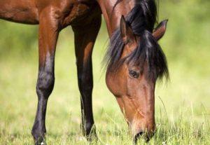 Botulismo em cavalos