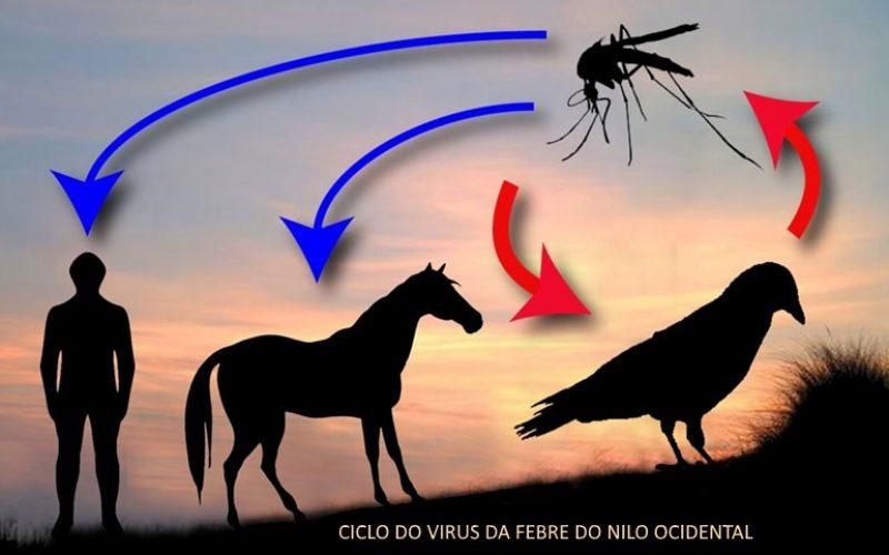 Febre do Nilo em cavalos