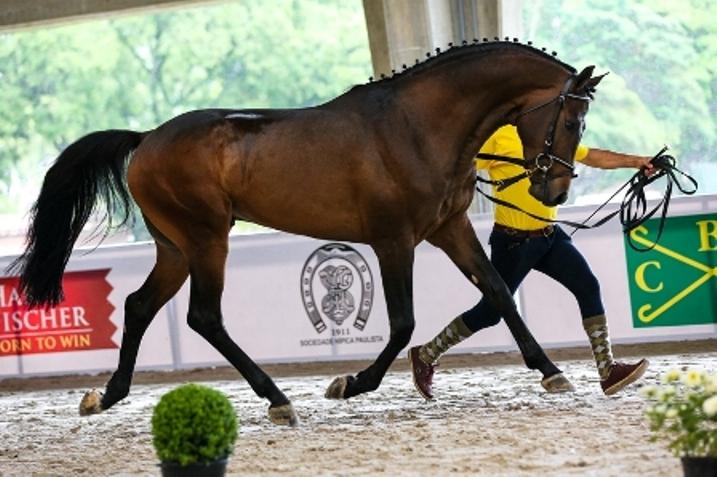 XIII Festival Nacional do Cavalo Brasileiro de Hipismo começa hoje