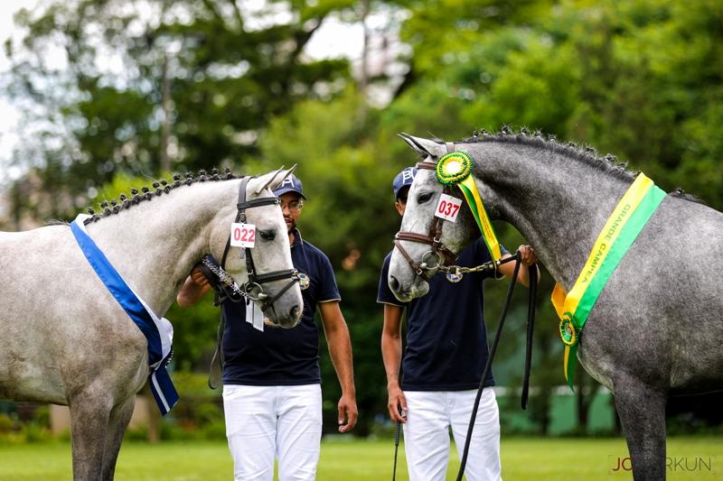 XV Festival Nacional do Cavalo BH começa nesta terça-feira