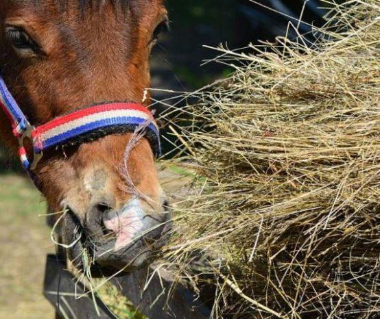 Os cinco maiores erros de proprietários de cavalos quando os alimentam