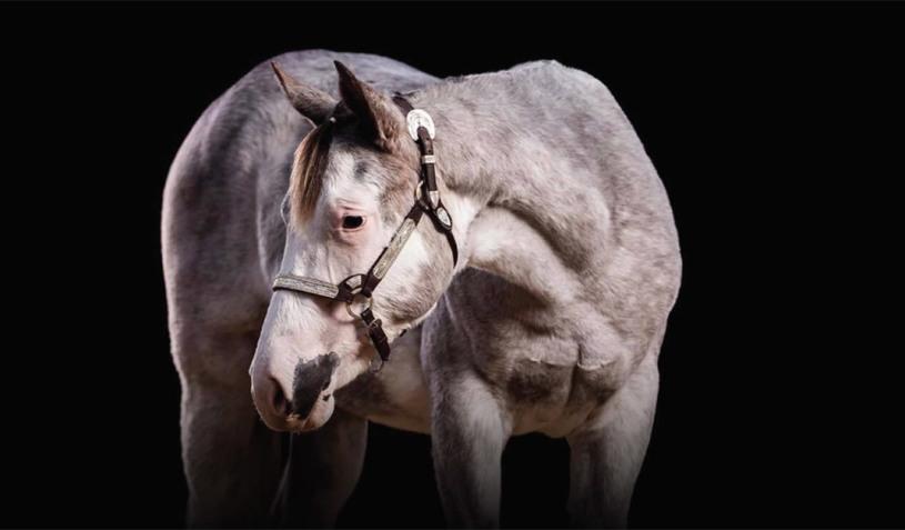 Como identificar corretamente os resultados do teste genético do Paint Horse - Cavalus