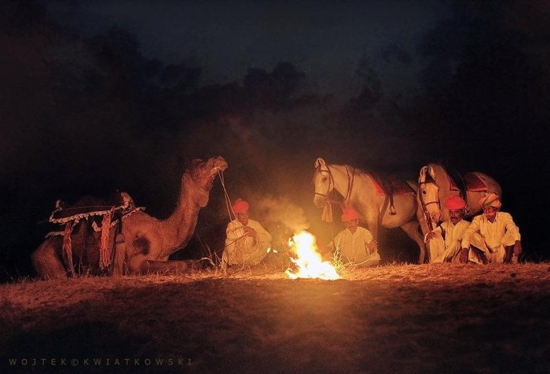 cavalos Marwari