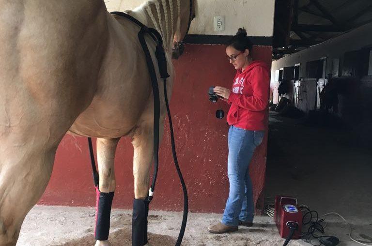 crioterapia em cavalos