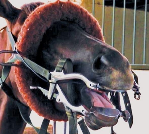 odontologica em equinos