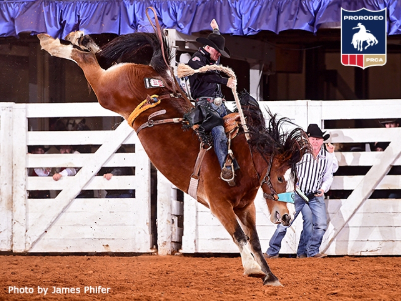 Ft Worth Stock Show
