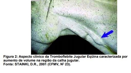 Tromboflebite Jugular Equina