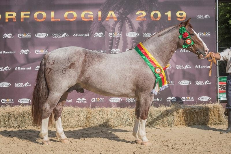 Ciclo de Passaportes do Cavalo Crioulo