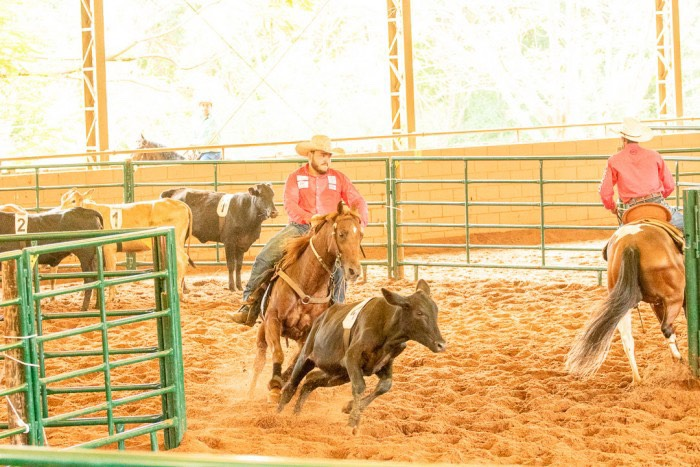 Ranch Sorting e Team Penning