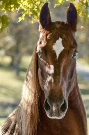 Marcações faciais de cavalos