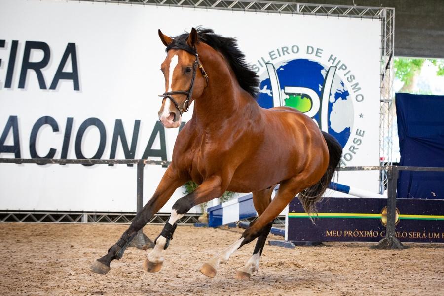 Exposição do Cavalo BH