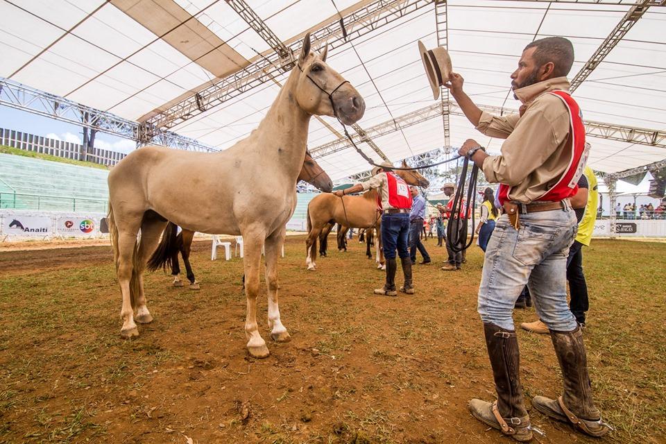 Pista coberta proporcionou mais conforto tanto para os animais quanto para os apresentadores - Imagem: Alemão