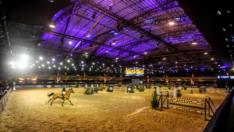 O bilionário mercado de cavalos