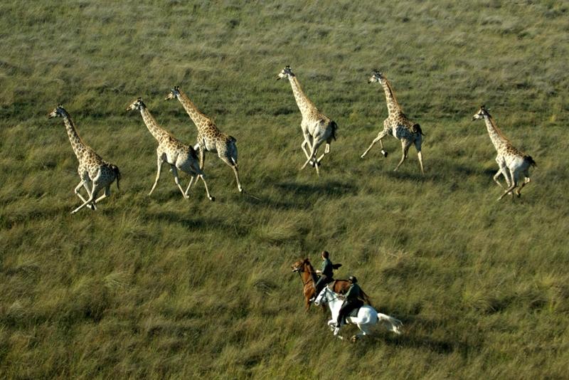 Cavalgada através da maior reserva da África do Sul
