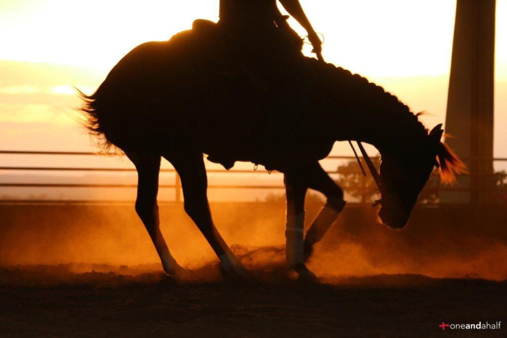 NRHA Pro Trainer fala sobre o mercado de cavalos da 'aberta. Continuamos a exibir o texto traduzido por Karoline Rodrigues que comenta um pouco de cada um dos mercados para Rédeas. Confira!