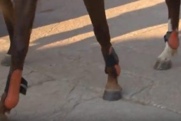 Proteja as patas do seu cavalo