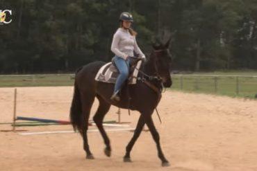 TV UC - Quebrando a rotina de um cavalo de salto