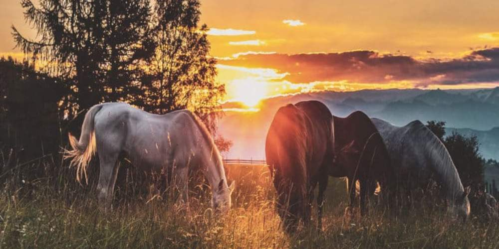 8 citações sobre cavalos que serão sua inspiração diária