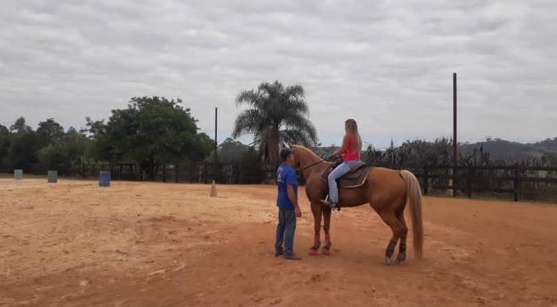 O desafio de treinar animais para amadores 02