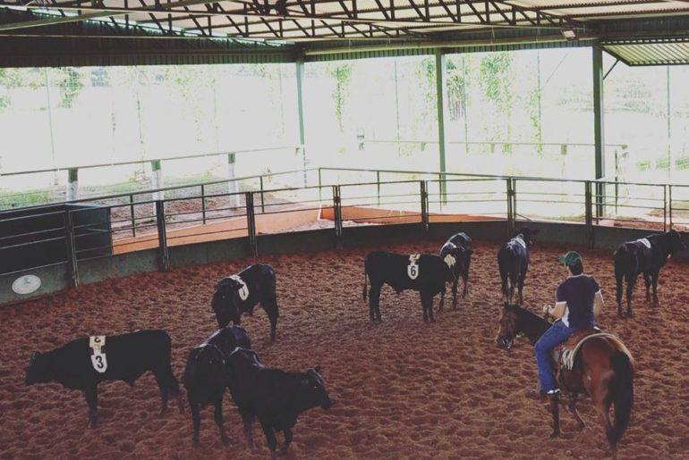 Preparo e treinamento de animais no CT Estância da Mata