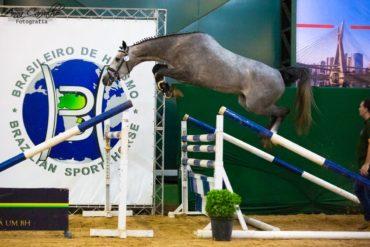 Cassila vence Campeonato Nacional de Salto em Liberdade