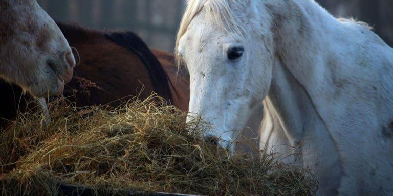 Melhor corte para feno de cavalo