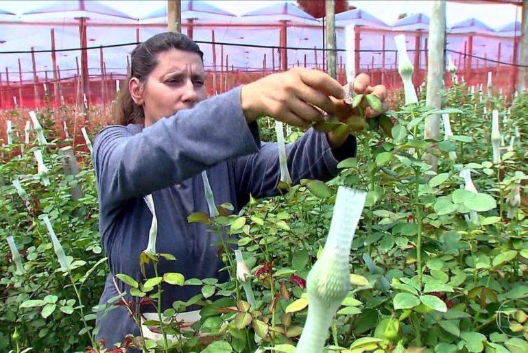 Censo Agropecuário mostra maior participação das mulheres na atividade rural