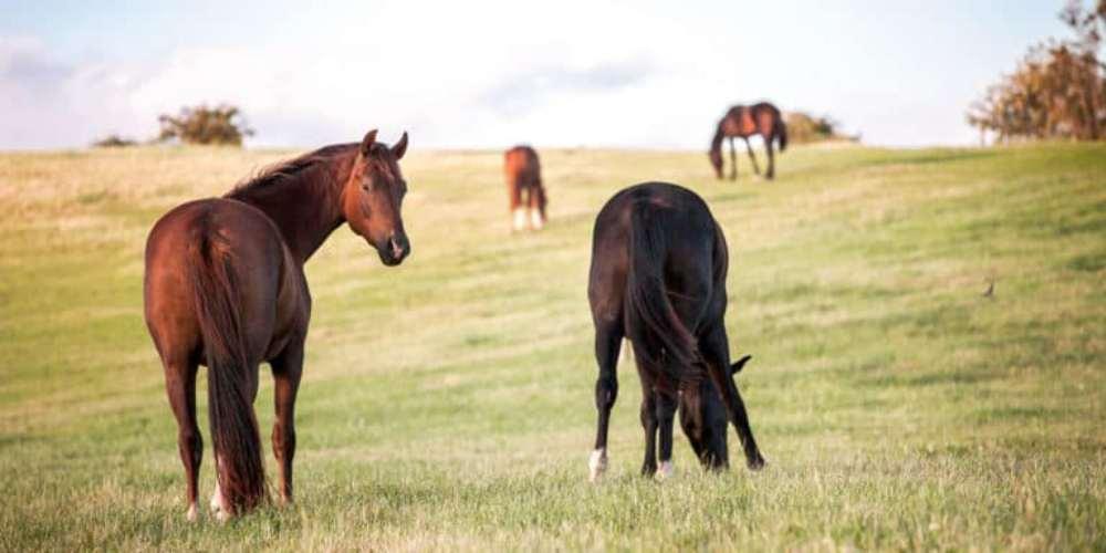 20 maneiras de ser grato ao seu cavalo