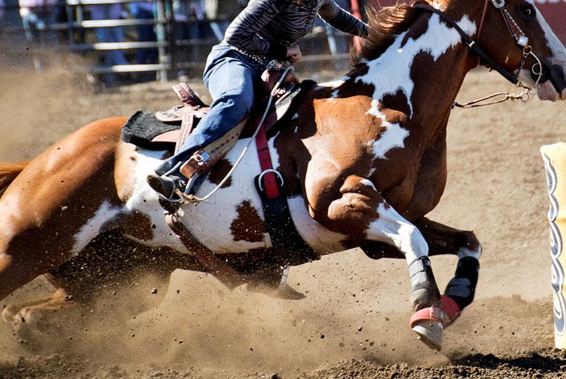 Hemorragia Pulmonar em cavalos é mais comum do que você pensa