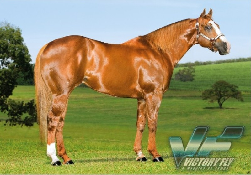 Victory Fly VM e Miss Fortunes Fool no topo do ranking ABQM