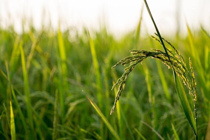 Produção global de orgânicos cresce 11% entre 2000 e 2017