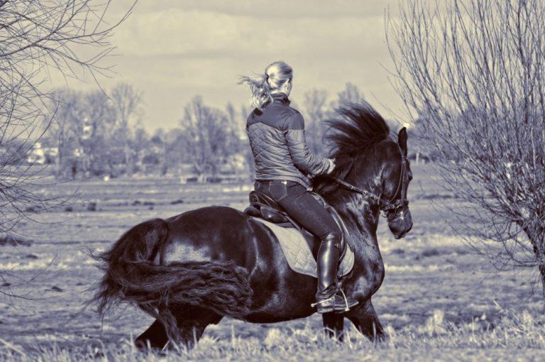 A equitação para o desenvolvimento social