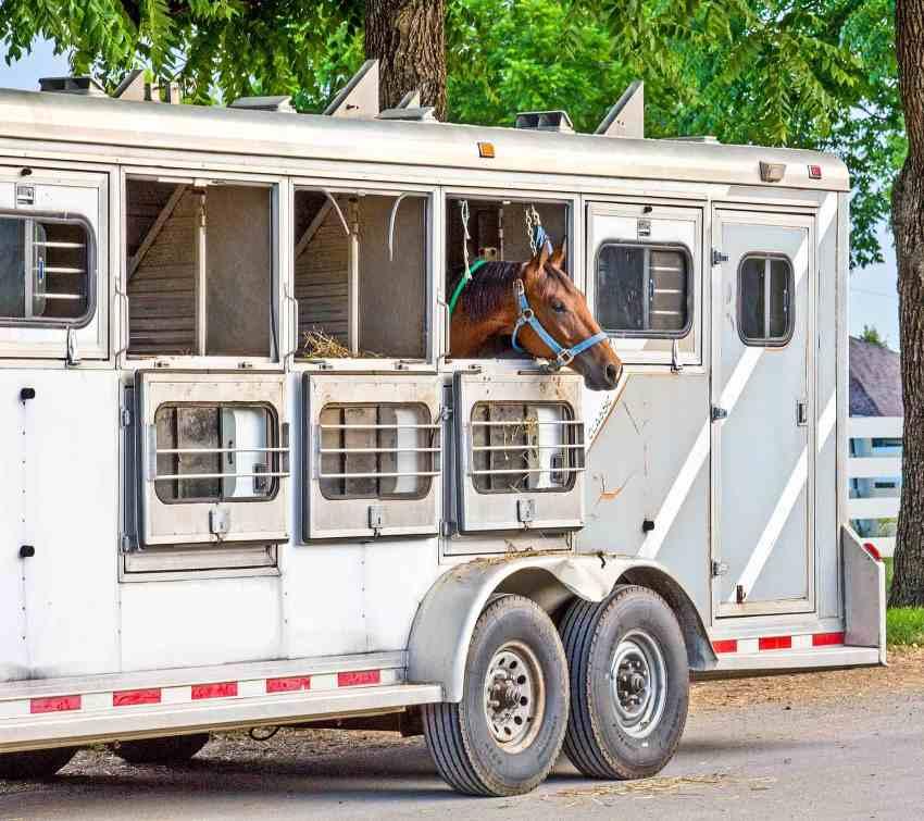 Como minimizar o estresse em equinos ao transportá-los Ao longo dos séculos os cavalos têm sido transportados por basicamente os mesmos motivos: competições, reprodução ou comércio