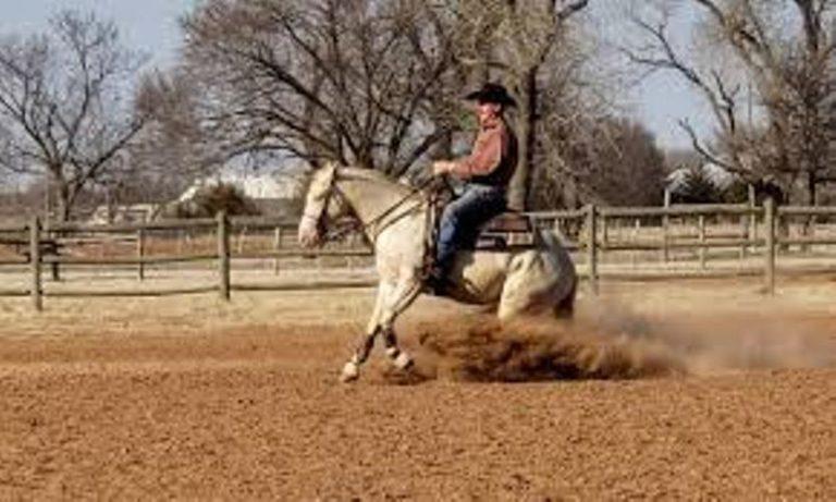 Doug Milholhand é ídolo em Rédeas e Working Cow Horse