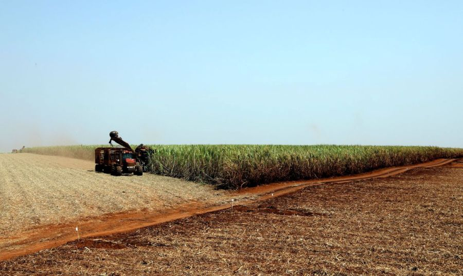 Pandemia: produtores rurais se preparam para diminuir riscos O produtor rural brasileiro tem buscado informações para encarar o novo coronavírus,
