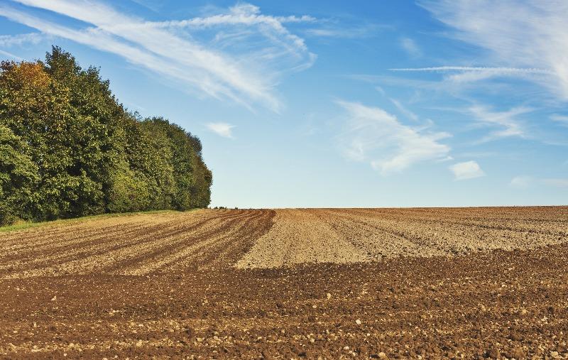 Agro exporta US$ 9,2 bilhões em março Soja em grãos, carne bovina in natura e açúcar puxam as vendas externas.