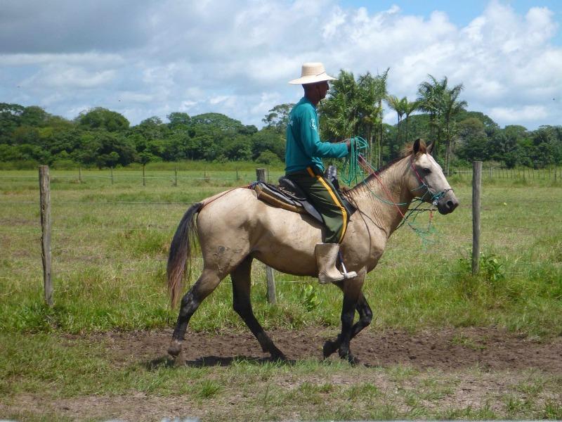 Cavalgada na Amazônia – Alter do Chão e Santarém Paulo Junqueira Arantes, do Cavalgadas Brasil, relata mais essa experiência incrível