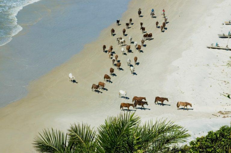 Cavalgadas na Bahia - Chapada e Costa do Cacau Paulo Junqueira aborda no artigo da semana sobre a dificuldade em organizar um novo destino para viagens a cavalo
