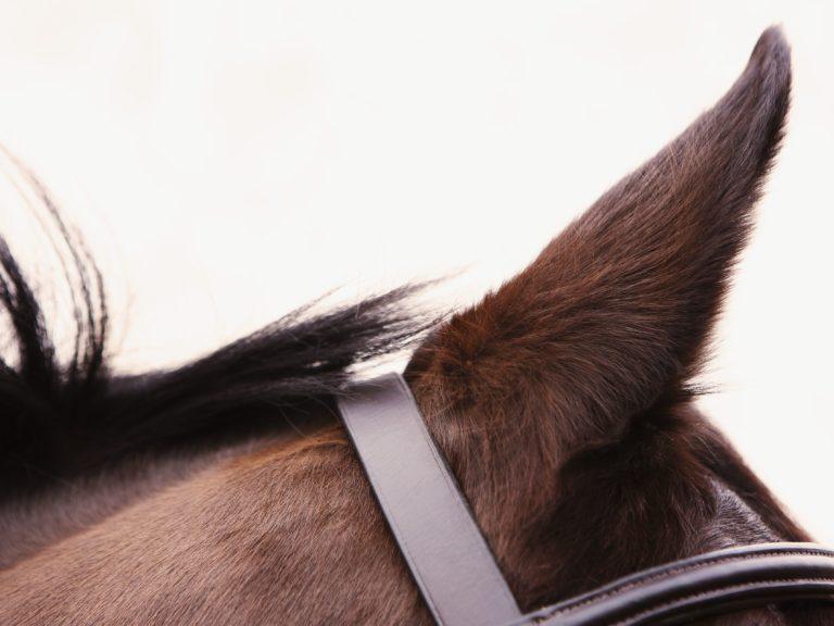 Os cavalos podem ouvir sons a distâncias maiores do que nós humanos Muitas vezes, o som está há vários quilômetros de distância