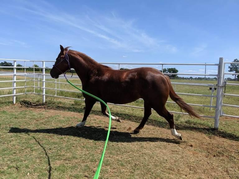 Vamos falar sobre as rotinas de quarentena e a aptidão dos cavalos Quem fala sobre o assunto para a Barrel Horse News é Summer Terry, proprietário do Superior Therapy LLC