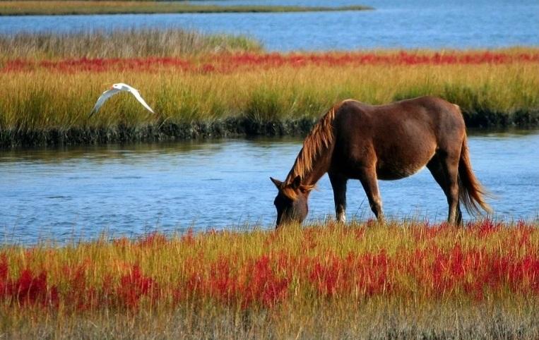 Durante a COVID-19 mantenha a dieta do seu cavalo em dia Assim como as atividades físicas do seu cavalo atleta de forma correta